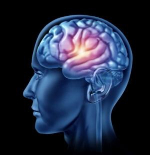 В мозге