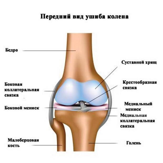 Передний вид ушиба колена