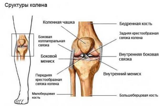 Структуры колена