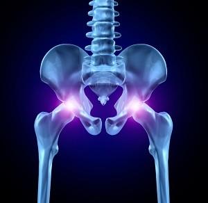 Анатомическое строение костей таза