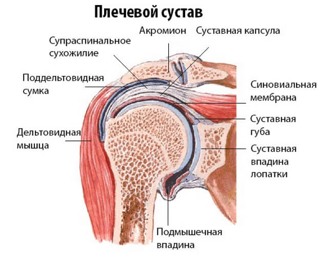 Плечо