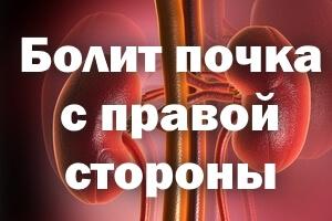 Сосуды и органы