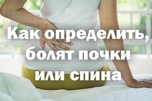 Как определить, болят почки или спина