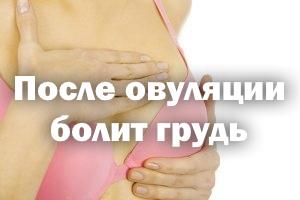 После овуляции ноет грудь