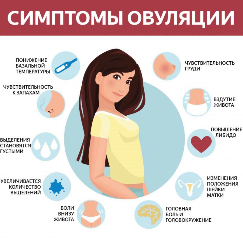 Симптомы овуляции девушек
