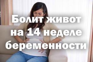 Болит животик на 14 неделе беременности