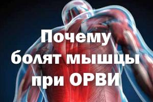 Почему болят мышцы при гриппе