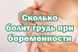 Сколько болят сиськи при беременности